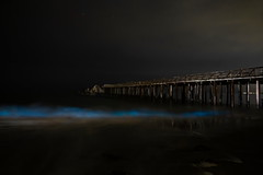 AK0I8496: Bioluminescent waves