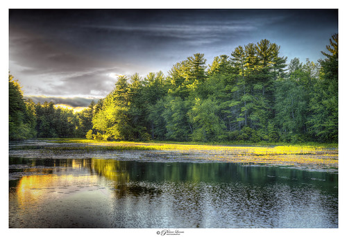 Holt pond, the sunset of life.