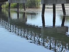 Mallard Lake 2020