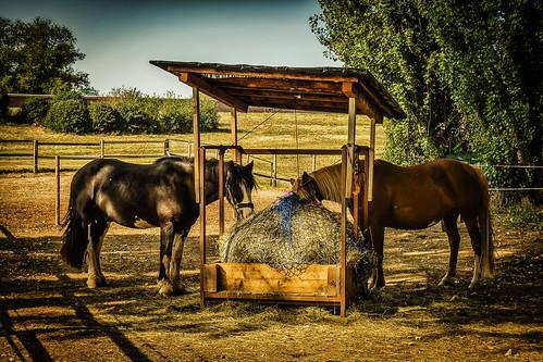 Zwei Pferde - gut in Futter