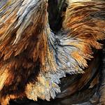 Part 7: Eagle