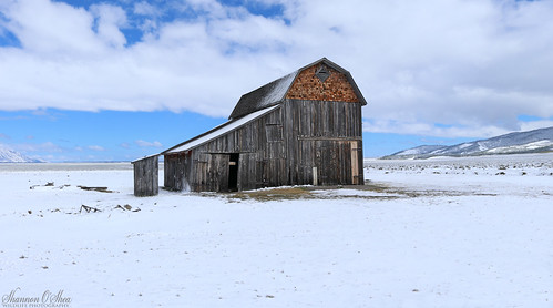 Dying old barn bathed in grays, trimmed in snow white