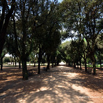 Viale dei Daini (Villa Borghese Gardens in Rome, Italy)  -  (Published by GETTY IMAGES) - https://www.flickr.com/people/71393709@N06/
