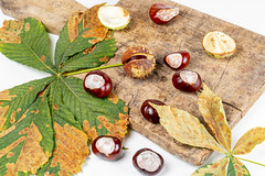 Autumn ripe chestnuts with leaves on an old kitchen board