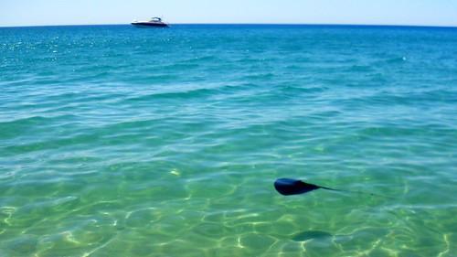 Una raya en el agua!!!