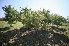 La mer de déchets a des arbres fruitiers