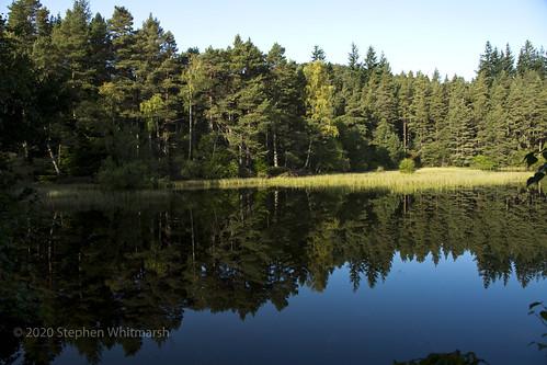 Tree-mendous Reflections
