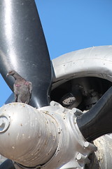 Pigeons on an engine