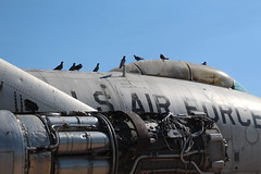 Pigeons on a B-47