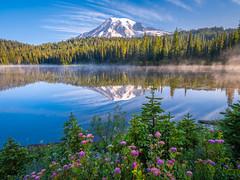 Mount Rainier National Park Wildflowers Superbloom Fuji GFX100 Fine Art Landscape Nature Photography! Washington State Art! Elliot McGucken 45EPIC Master Medium Format Photographer Fuji GFX 100 & Fujinon Fujifilm GF Lens!