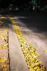 Mùa thu Hà Nội (Autumn in Hanoi)