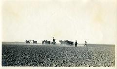 [CALIFORNIA-J-0058] A.M. Merrill Ranch - Collinsville