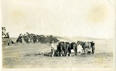 [CALIFORNIA-J-0069] A.M. Merrill Ranch - Collinsville