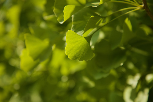 In a Leaf