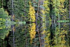 Autumn pond-reflection