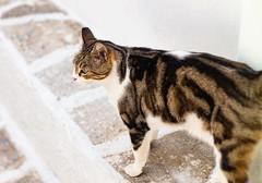 a nice cat
