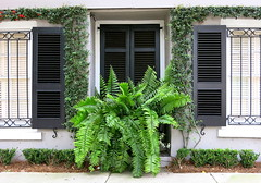 Fern: 47 Meeting Street, Charleston, SC