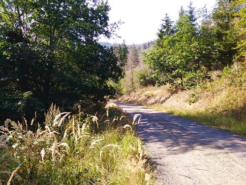 Die vielleicht schönste Strecke des Tages durch viel Wald!