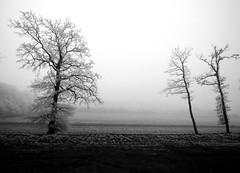 Il n'y a pas d'arbre qui n'ait senti la force du vent.
