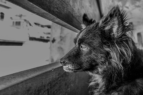 Um olhar canino