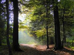 Der Weg ins Paradies?