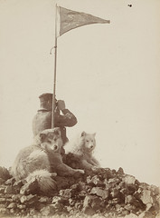 Man with binoculars and sledge dogs, Antarctica, 1899, British Antarctic(Southern Cross) Expedition