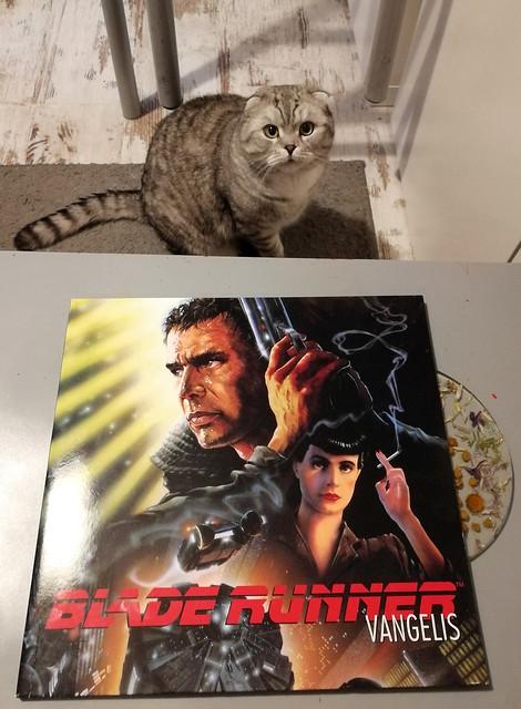 Photo:Звёздная (Blade Runner '82 - Vangelis) + cat By deepskyobject