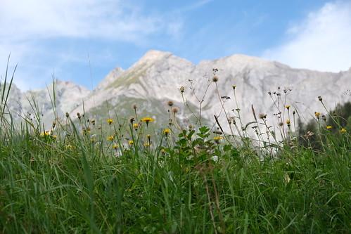 spätsommerliche Alpenwiese - Ochsenbug