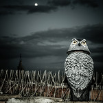 Gufo_Owl - https://www.flickr.com/people/45586819@N00/