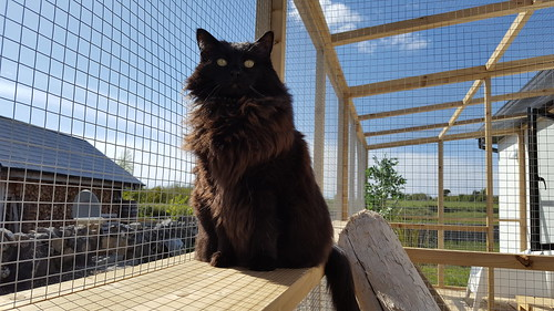 Hillview Cat Lodge Cattery Galway