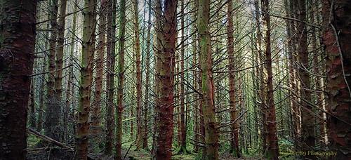 A woodland scene.