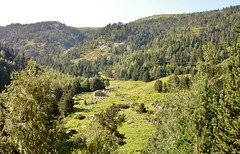 La Lipodere, massif du Canigou