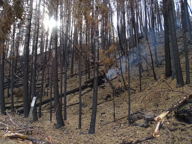 Photo:Archie Ck Fire, Hwy 138e, MP 33, looking north. By F.Eatherington