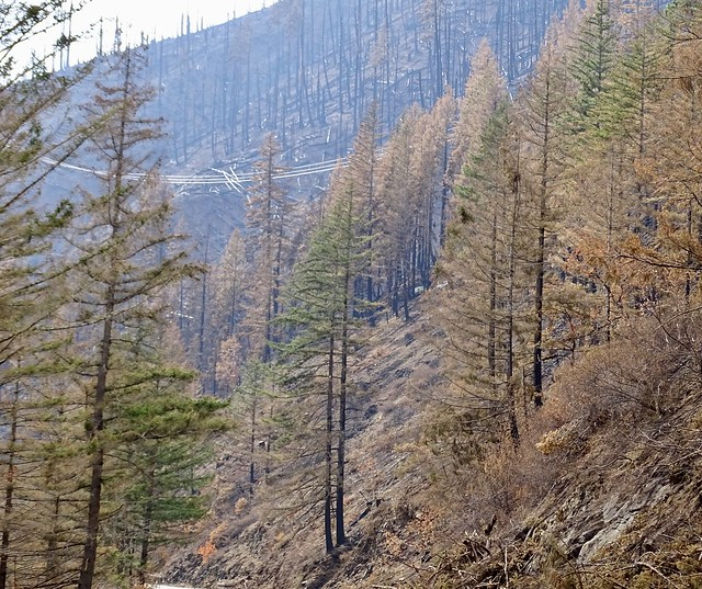 Photo:PacifiCorp powerlines in the Archie Ck Fire, MP 34, looking NW By F.Eatherington