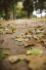 Leaves on concrete in the park.