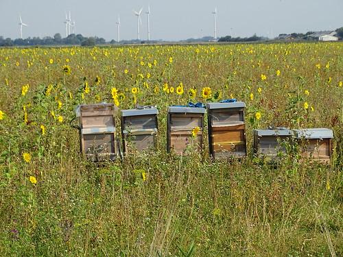 2020 08 Bluemchen und Bienchen