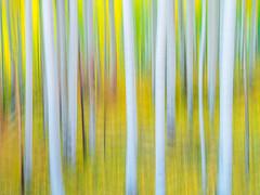Autumn Aspens Abstracts: Telluride Autumn Colors Fall Foliage Colorado Aspens Fuji GFX100 Fine Art Landscape Nature Photography! Elliot McGucken 45EPIC Master Medium Format Photographer Fuji GFX 100 & Fujinon Fujifilm GF Lens!