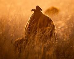 2020 Oct 1 Antelope Island
