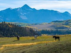 Wilson Peak Telluride Autumn Colors Fall Foliage Colorado Aspens Fuji GFX100 Fine Art Landscape Nature Photography! Elliot McGucken 45EPIC Master Medium Format Photographer Fuji GFX 100 & Fujinon Fujifilm GF Lens!