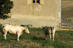K3030047 - Photo of Saint-Martin-du-Lac