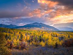 Kebler Pass Crested Butte Gunnison National Forest Peak Autumn Colors Fall Foliage! Colorado Aspens Fuji GFX100 Fine Art Landscape Nature Photography! Elliot McGucken 45EPIC Master Medium Format Photographer Fuji GFX 100 & Fujinon Fujifilm GF Lens!
