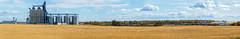 Grain elevator panorama near Sexsmith, Alberta