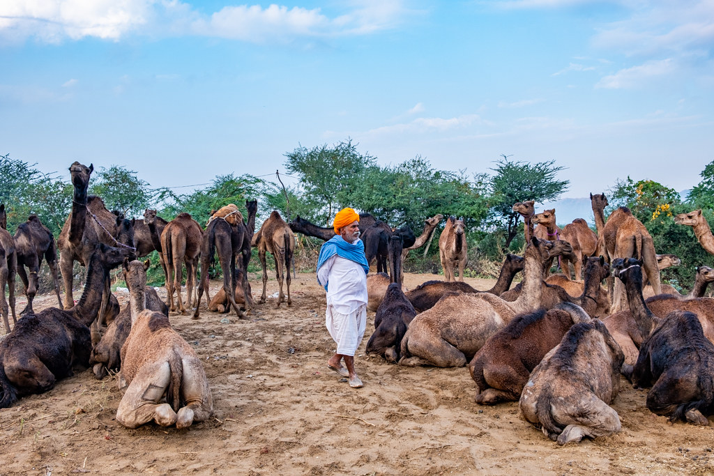 PushkarCamelFair19_147