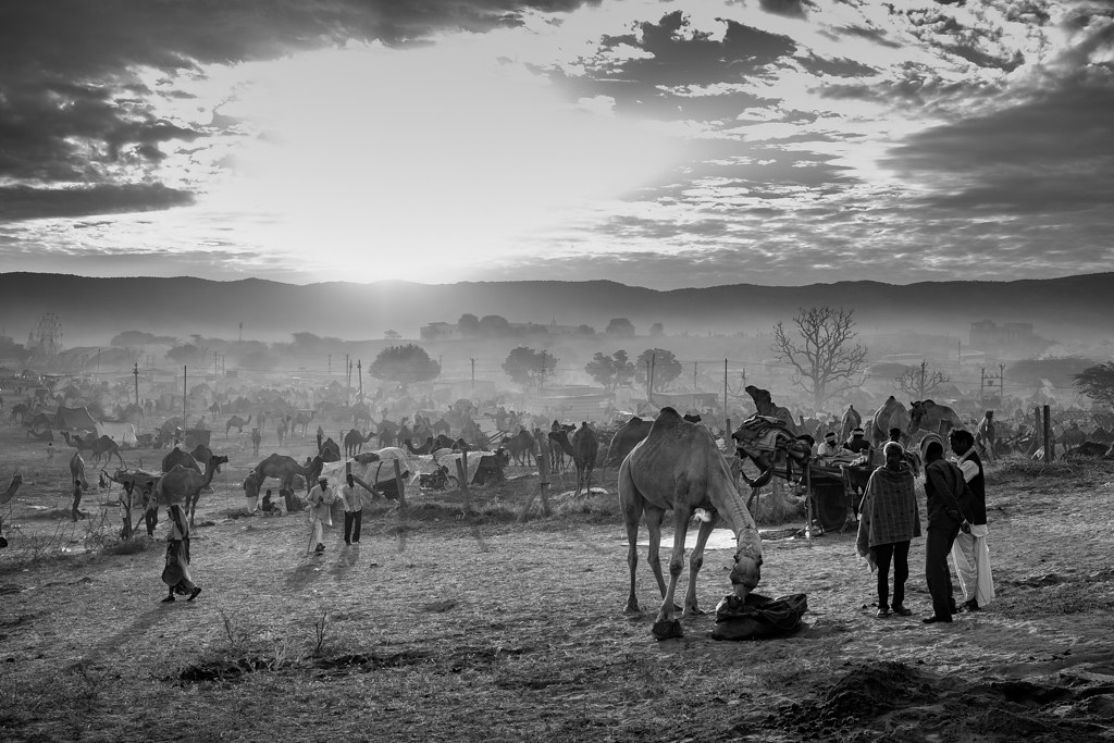 PushkarCamelFair19_061