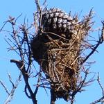 Aves en el Paseo del Norte. La Guardia (Toledo) 3-10-2020