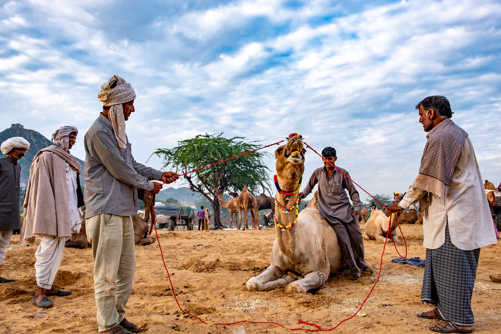 PushkarCamelFair19_076