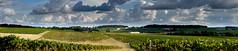 Vignoble cognaçais en automne