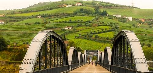 Vinhedos do Douro (Régua-Portugal)