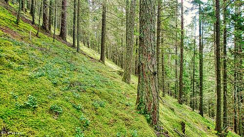 im steilen Wald - in the steep forest