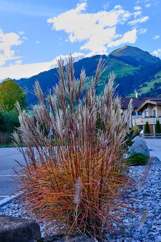 Autumn vibes | Brixen im Thale 🍁 🍂